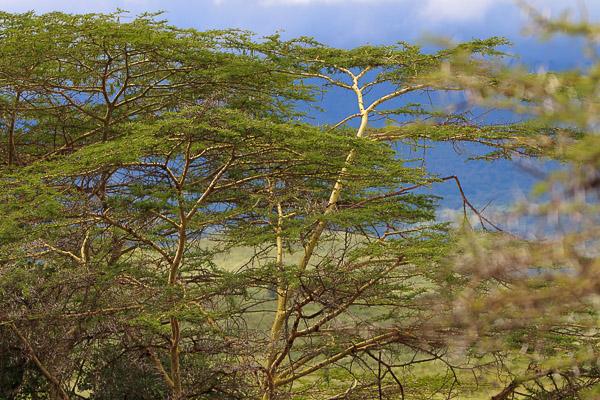 Tansania_2009-5595.jpg