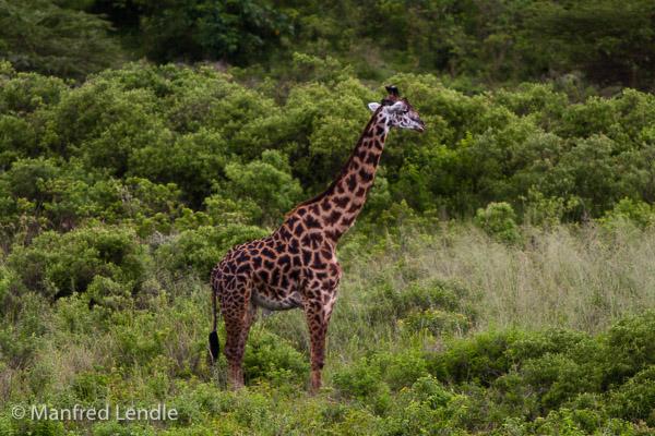 Tansania_2009-5657.jpg