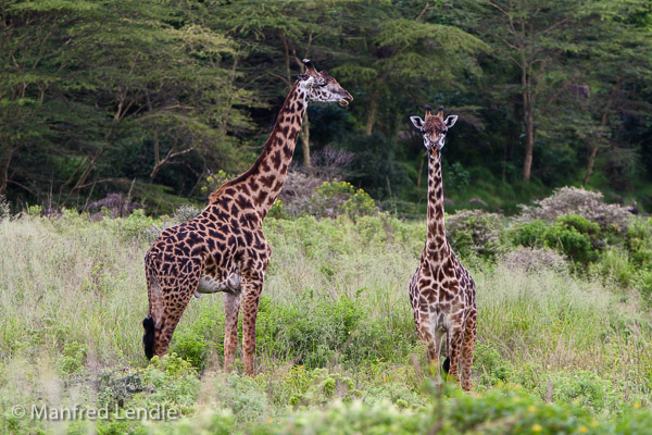 Tansania_2009-5661.jpg