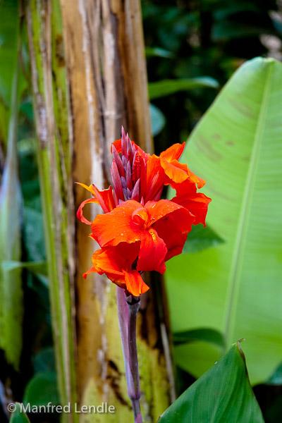 Tansania_2009-5443.jpg