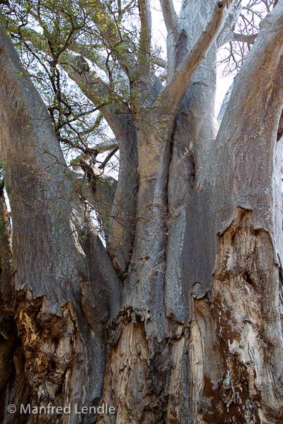 Zambia_2011_1D-7504.jpg
