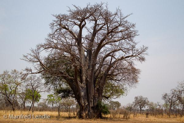 Zambia_2011_1D-7507.jpg
