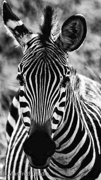 Zambia_2011_1D-6906.jpg