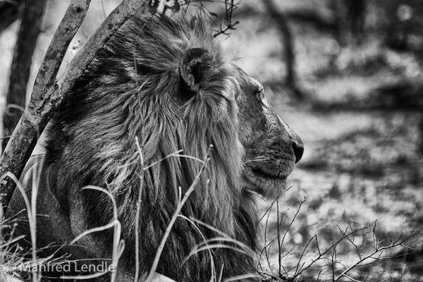 Zambia_2011_1D-8387.jpg