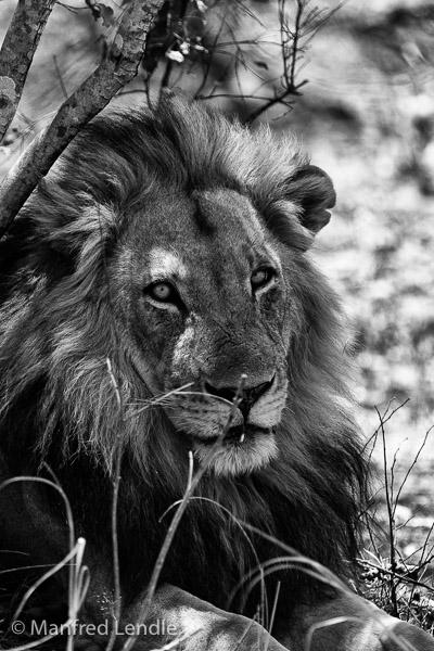 Zambia_2011_1D-8398.jpg