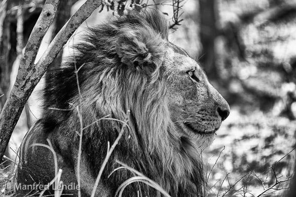 Zambia_2011_20D-2.jpg