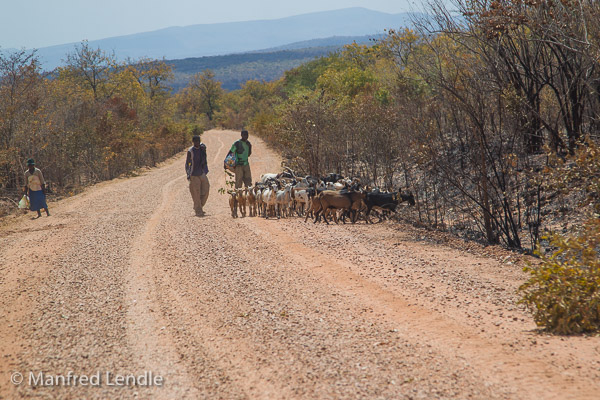 Zimbabwe_2012_1D-9151.jpg