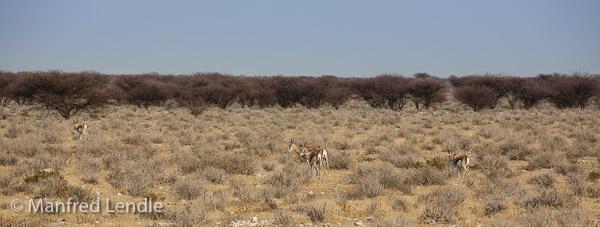 2014_Namibia_5D-3806.jpg