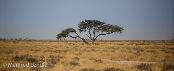 2014_Namibia_5D-4136.jpg