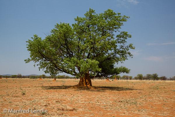2014_Namibia_5D-4204.jpg