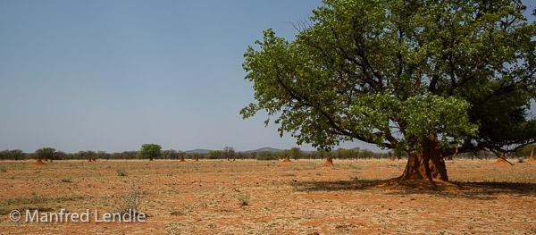 2014_Namibia_5D-4205.jpg