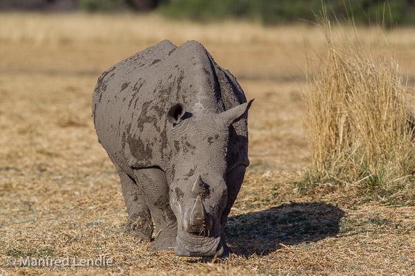 2014_Namibia_1D-5091.jpg