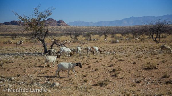 2014_Namibia_5D-5095.jpg