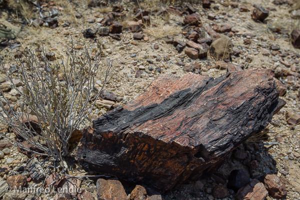 2014_Namibia_1D-6823.jpg