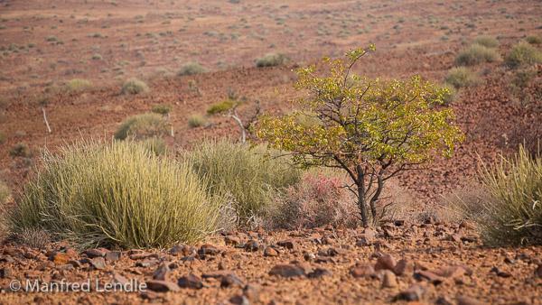 2015_Namibia_5D-0650.jpg