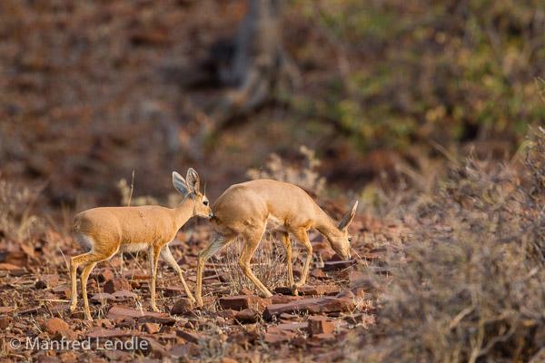 2015_Namibia_1D-1301.jpg