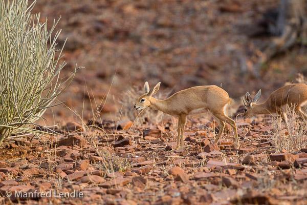 2015_Namibia_1D-1302.jpg