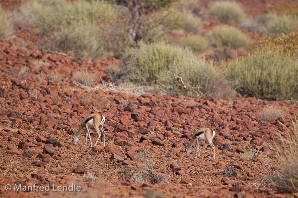 2015_Namibia_1D-1537.jpg
