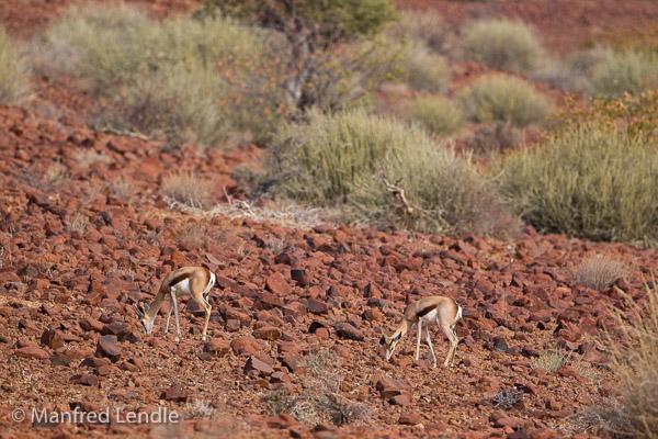 2015_Namibia_1D-1538.jpg