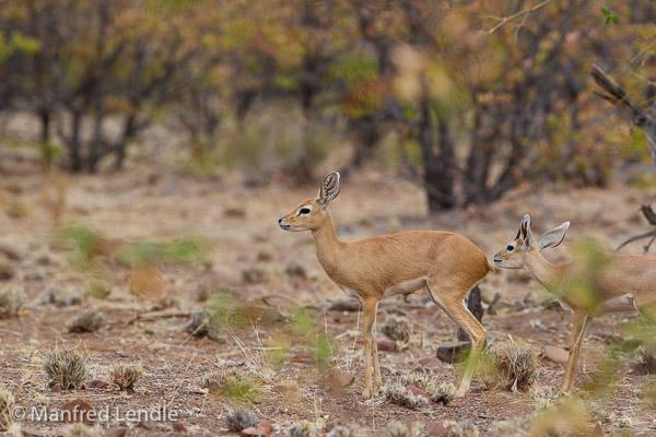 2015_Namibia_1D-1682.jpg