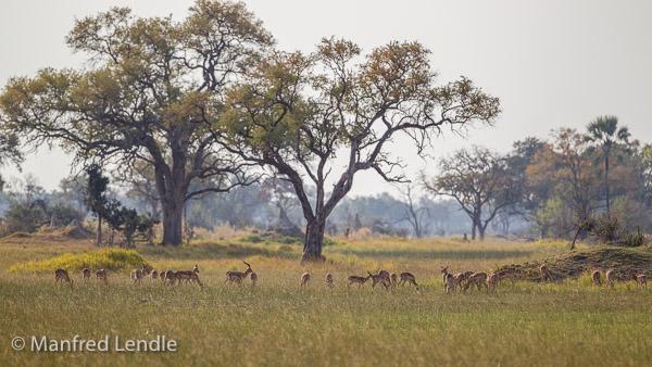 2015_Namibia_1D-6225.jpg