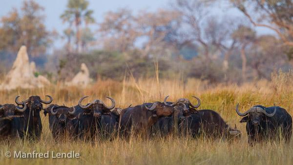 2015_Namibia_1D-6324.jpg