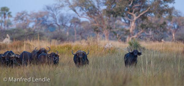 2015_Namibia_1D-6331-Pano.jpg