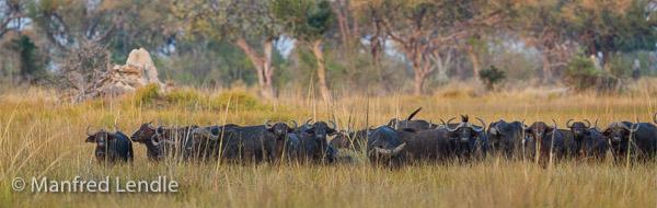 2015_Namibia_1D-6344-Pano.jpg