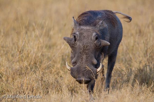 2015_Namibia_1D-6415.jpg