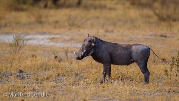 2015_Namibia_1D-6439.jpg
