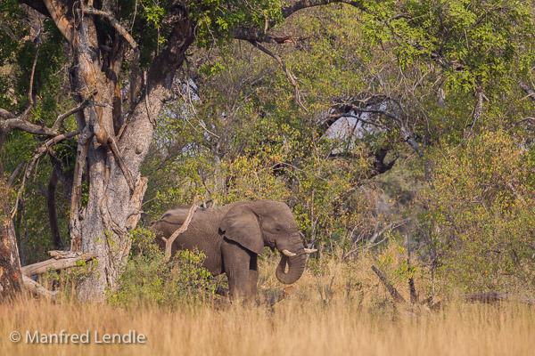 2015_Namibia_1D-7314.jpg