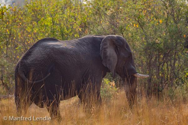 2015_Namibia_1D-7320.jpg