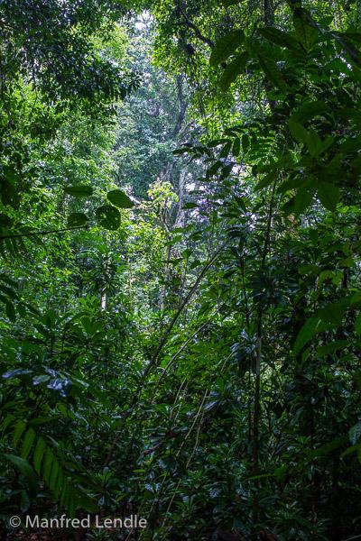 2017_Costa_Rica_1D-1144.jpg