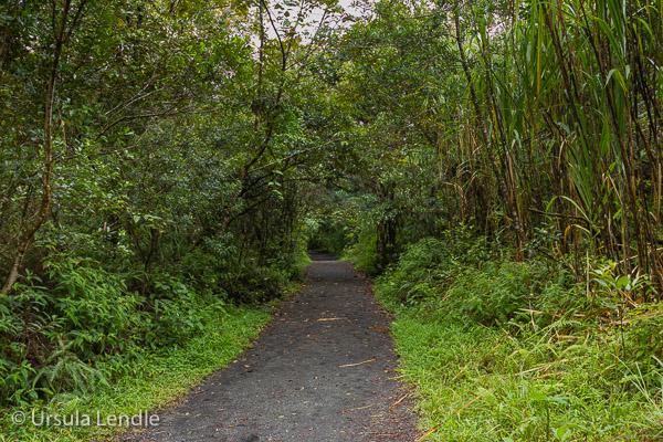 2017_Costa_Rica_5D-1825.jpg