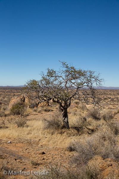 2018_Kalahari_5D-2609.jpg