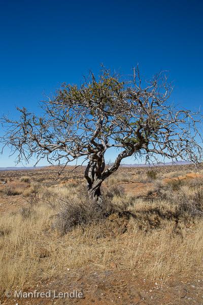 2018_Kalahari_5D-2612.jpg