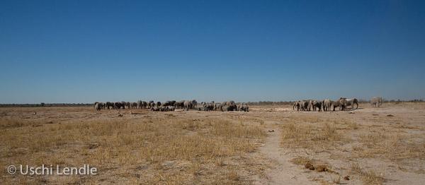 2018_Kalahari_5D-7848-Bearbeitet.jpg