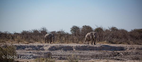 2018_Kalahari_5D-9084.jpg