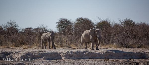 2018_Kalahari_5D-9089.jpg