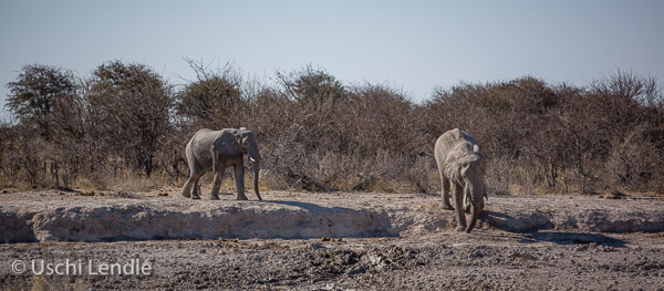 2018_Kalahari_5D-9092.jpg