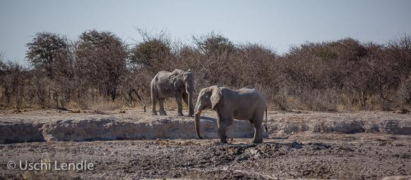 2018_Kalahari_5D-9097.jpg