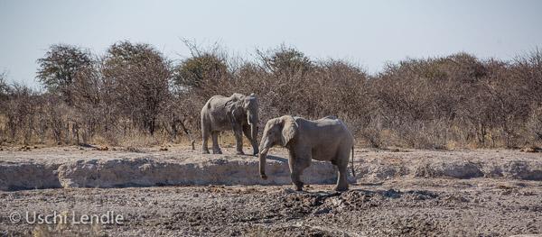 2018_Kalahari_5D-9099.jpg