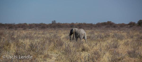 2018_Kalahari_5D-9112.jpg