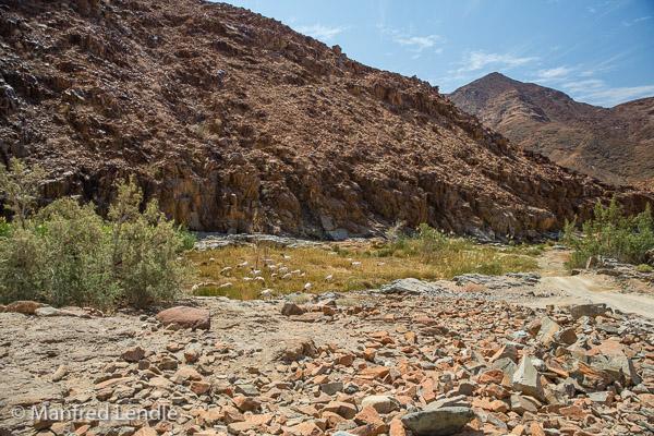 2018_Kalahari_5D-4239.jpg