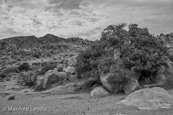2018_Kalahari_1D-2205-Bearbeitet.jpg