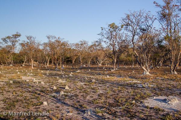2019_Zambia_1D-9829.jpg