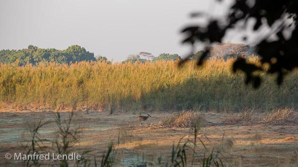 2019_Zambia_5D-9825.jpg