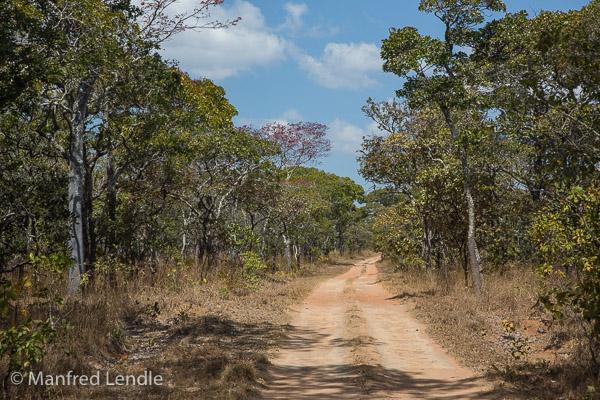 2019_Zambia_5D-1326.jpg