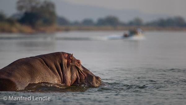 2019_Zambia_1D-6050.jpg