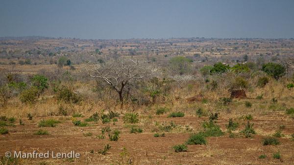 2019_Zambia_1D-5876.jpg